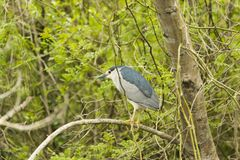 Wild lebende Tiere im Fluss Lizenzfreie Stockbilder