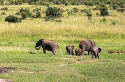 Wild lebende Tiere in Maasai Mara, Kenia Lizenzfreie Stockfotografie