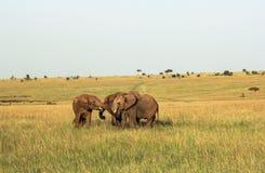 Wild lebende Tiere in Maasai Mara, Kenia Lizenzfreie Stockfotos