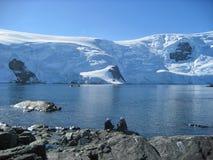 Wild lebende Tiere mit zwei Leuten, die in die Antarktis aufpassen Lizenzfreies Stockfoto