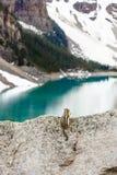 Wild lebende Tiere am Morain See Stockfotografie
