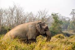 Wild lebende Tiere in Sauraha Stockbild