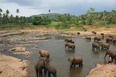 Wild lebende Tiere in Sri Lanka Lizenzfreies Stockbild