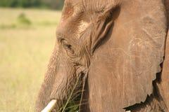 Wild lebende Tiere in Tanzania stockbilder