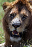 Wild lebende Tiere in Tanzania Stockbild