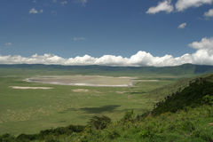 Wild lebende Tiere in Tanzania Lizenzfreies Stockfoto