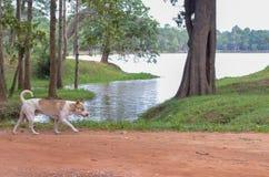 Wild lebende Tiere und Hund stockbild