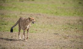 Wild lebende Tiere und Natur stockfotos