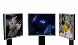 Wild lebende Tiere und Technik. Stockfotos
