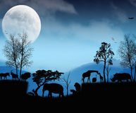 Wild lebende Tiere von Afrika Stockfotos