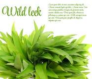 Wild Leek Isolated on White Background.  Stock Images