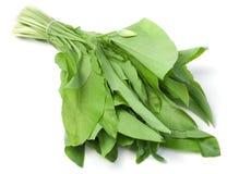 Wild leek vegetable Stock Image