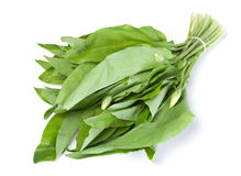Wild leek vegetable Stock Photos