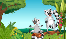 Wild lemurs in the woods. Illustration of wild lemurs in the woods vector illustration