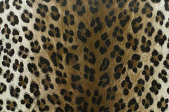 Wild leopard pattern background or texture Royalty Free Stock Photos