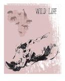 Wild life Stock Image