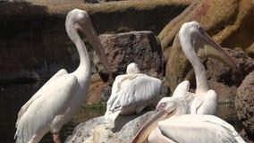 Storks wild wading birds
