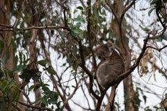 Wild life in Australia Stock Photo