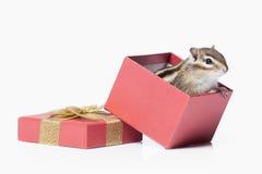 Wild life. Chipmunk isolated on white background Stock Image