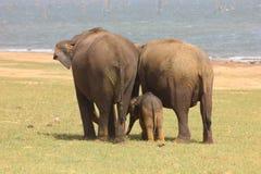 Wild life,eliphant, family,protection,new born sri lanka wild life