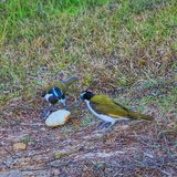 mysterious Birds in wild life park in Kakadu national park in Darwin royalty free stock photography