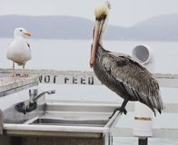 Wild life on the pier Royalty Free Stock Photography