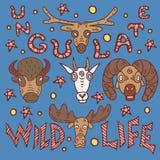 Wild life poster royalty free illustration
