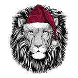 Wild Lion Christmas illustration Wild animal wearing christmas santa claus hat Red winter hat Holiday picture Happy new. Christmas illustration Wild animal vector illustration