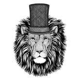 Wild Lion wearing cylinder top hat. Vintage style drawing Animal wearing cylinder top hat stock photos