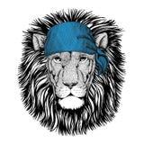 Wild Lion Wild animal wearing bandana or kerchief or bandanna Image for Pirate Seaman Sailor Biker Motorcycle Royalty Free Stock Images