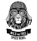 Wild lion Wild cat Be wild and free T-shirt emblem, template Biker, motorcycle design Hand drawn illustration Stock Images