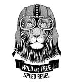 Wild lion Wild cat Be wild and free T-shirt emblem, template Biker, motorcycle design Hand drawn illustration Royalty Free Stock Images