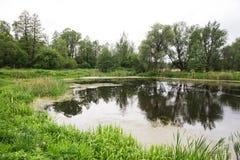 Wild little pond Stock Photo