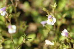 Wild little purple flowers in autumn stock photos