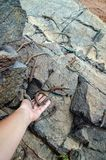 Wild lizards on rocks and in hand stock image