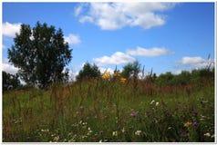 wild ljusa blommor Arkivfoton