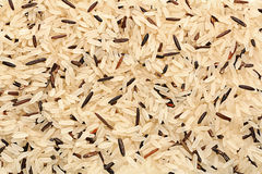 Wild and long polished rice Royalty Free Stock Photography
