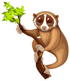 Wild loris on the branch Stock Image