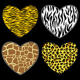 Wild love. Hearts with animal print in  format, individual objects Stock Images