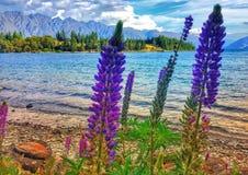 wild lupins Royaltyfria Bilder