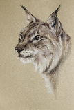 Wild lynx portrait Royalty Free Stock Image
