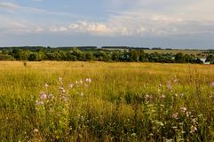 Wild mallow near the water storage. View at the Shatov water storage over the fields with wild mallow flowers on the foreground, Tula region Stock Photos