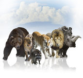 Wild Mammals. Digital Painting Of Wild Mammals Against A Blue Sky Stock Photos