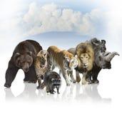 Wild Mammals Stock Photos