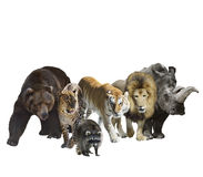Wild Mammals Royalty Free Stock Images