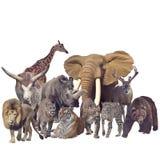 Wild mammals on white background. Wild mammals isolated on white background stock photos
