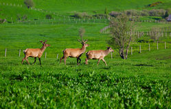 Wild marals Stock Photo