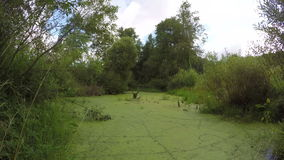 Wild marsh pond water with green duckweed. Timelapse 4K. Wild natural marsh pond water with green duckweed. Timelapse 4K stock video