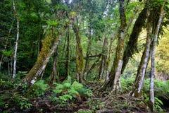 Wild Mayan jungle in the national park Semuc Champey Guatemala Stock Photo