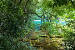 Wild Mayan jungle in the national park Semuc Champey Guatemala Royalty Free Stock Photos